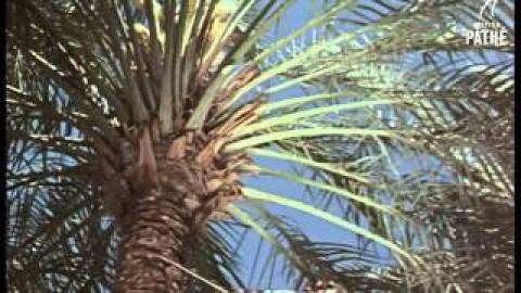 Iraq in 1950 Video