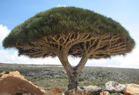 Socotra Island Video