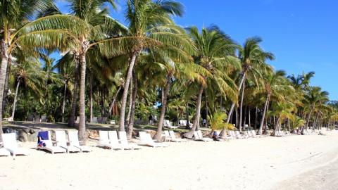 Hamilton Island Palms