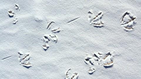 Bird Foot Prints