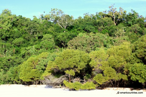 Whitehaven Beach Flora