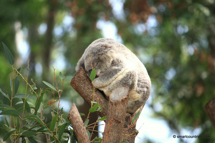 Koala Wildlife Park