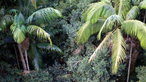 Piccabeen Palms Queensland