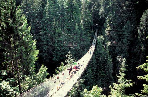 Temperate Rainforest Vancouver