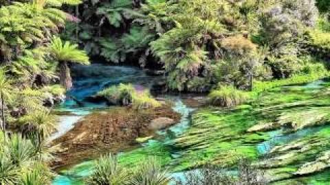 New Zealand Nature Video