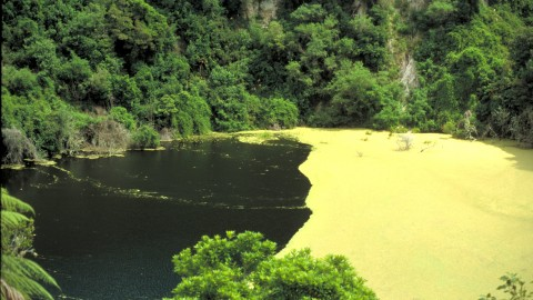 Southern Crater Waimangu