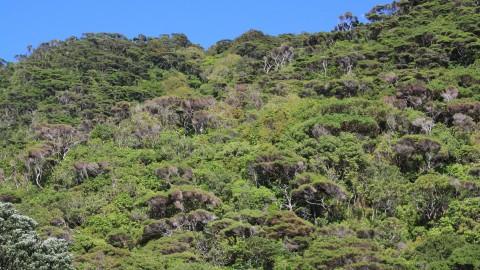 Rainforest on Kapiti
