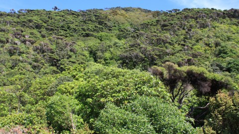 Kapiti Island Bush