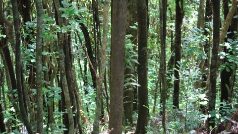Kapiti Forest