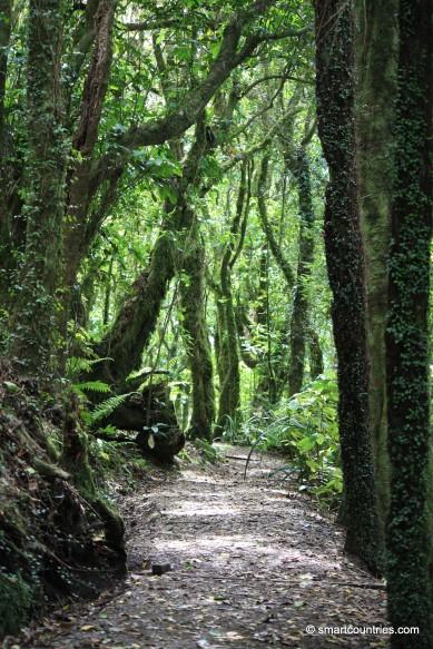 Kapiti Rainforest