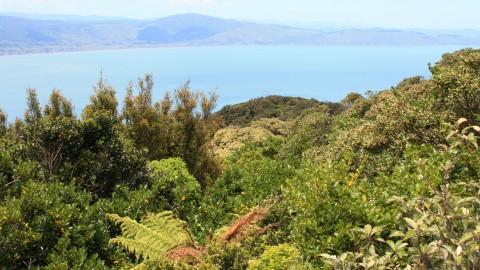 Kapiti South-East View