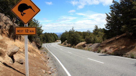Kiwi Road Sign Mount Ruapehu