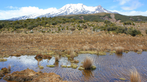 View of Mt Ruapehu from Waitonga Falls Walk