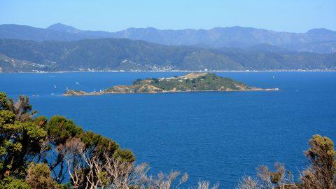 Somes Island & Wellington Harbour
